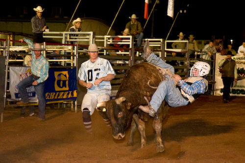 Rodeo;activity;animals;beef cattle;bucking;bull;cattle;cowboys;livestock;ride;rider;riders;riding;swan hill show