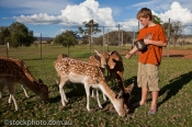 animal;animals;bambi;beautiful;beauty;boy;brown;cautious;child;country;countrysi