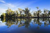 environment;scenery;water;river;plants;tree;deciduous;moulamein;wakool;horizonta
