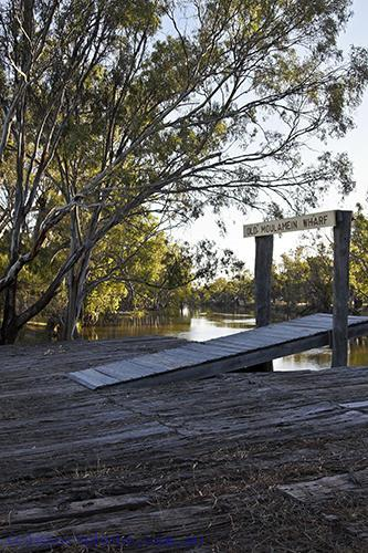 environment;scenery;water;river;plants;tree;deciduous;moulamein;wakool;old;wharf;red;gum;wood;planks;vertical;