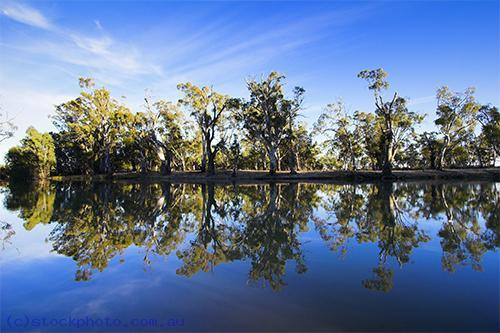 environment;scenery;water;river;plants;tree;deciduous;moulamein;wakool;horizontal;morning;edwards;gum;tree;gum;reflections;