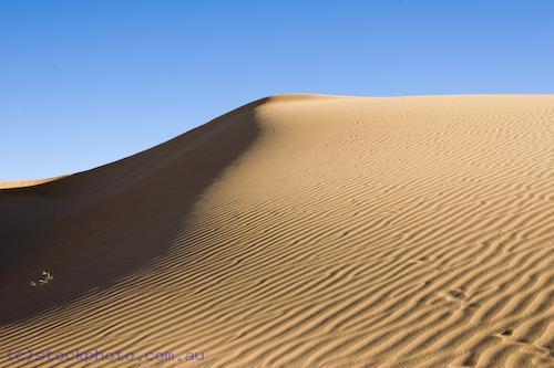 Australia;Victoria;arid;australia;australian;climate;color;colour;desert;deserts;detail;drought;dry;dune;dunes;evening;golden;grains;harsh;high;hill;hills;horizontal;hot;inhospitable;landscape;lines;mildura;nature;pattern;perie;perry;red;ripple;sand;scenery;shifting;texture;travel;unspoilt;wave;wind;yellow;