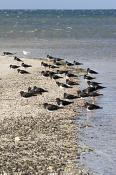 animal;animalia;australia;australian;bay;beach;beak;bill;bird;coast;ecotourism;e