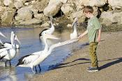 GENDER;animal;australia;australian;bay;beach;beak;bill;bird;boy;child;coast;cons