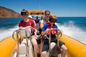 action;adult;adventure;animal;aquatic;australia;australian;bay;blue;boat;boating