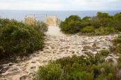animal;australian;borda;cape;chase;cliff;environment;flinders;horizontal;island;