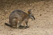 animal;animala;animals;australian;bird;birds;fauna;holiday;horizontal;island;kan