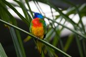 animal;animala;animals;australian;bird;birds;chested;fauna;holiday;horizontal;is
