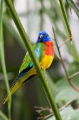 animal;animala;animals;australian;bird;birds;chested;fauna;holiday;island;kangar
