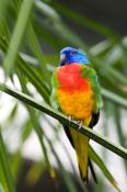 animal;animala;animals;australian;bird;birds;chested;fauna;holiday;island;kangar