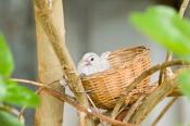 animal;animala;animals;australian;baby;basket;bird;birds;chick;fauna;holiday;hor