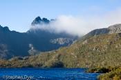australia;bush;bushland;council;cradle;dove;ecology;ecosystem;environment;enviro