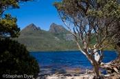 australia;bush;bushland;council;cradle;ecology;ecosystem;environment;environment