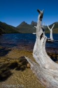 australia;beaten;bush;bushland;council;cradle;ecology;ecosystem;environment;envi