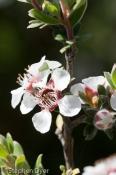 Myrtaceae;australia;devils;ecology;ecosystem;environment;environmentalism;flora;