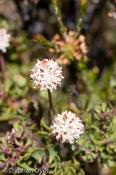 australia;devils;ecology;ecosystem;environment;environmentalism;flora;flower;gre