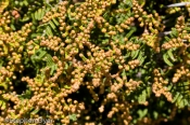 australia;colour;devils;ecology;ecosystem;environment;environmentalism;flora;flo