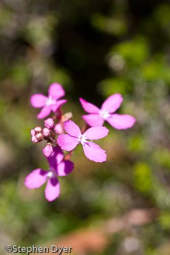 australia;devils;ecology;ecosystem;environment;environmentalism;flora;flower;great western;gullet;native;tasmania;tiers;wild;vertical