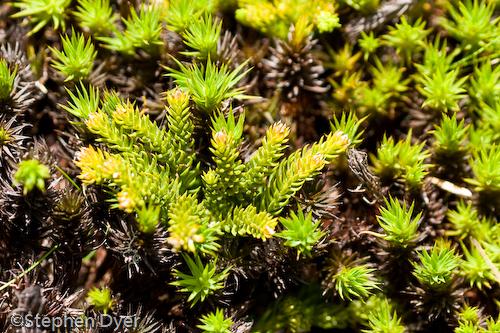 australia;devils;ecology;ecosystem;environment;environmentalism;flora;flower;great western;green;gullet;native;tasmania;tiers;wild;horizontal