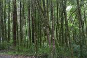 environment;scenery;land;forest;rainforest;plants;tree;deciduous;ash;fern;horizo