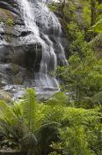 environment;scenery;land;forest;rainforest;plants;fern;treefern;water;waterfall;