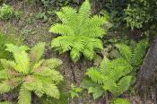 environment;scenery;land;forest;rainforest;plants;fern;treefern;above;horizontal