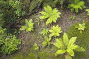 environment;scenery;land;forest;rainforest;plants;fern;treefern;above;horizontal