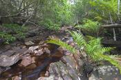 Cape;Conran;East;Gippsland;Yeerung;gorge;environment;scenery;water;river;plants;