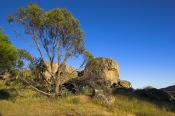 Melville;Caves;environment;scenery;land;rocks;mountain;caves;plants;tree;morning