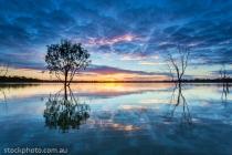 australia;background;beautiful;beauty;blue;branch;bright;color;colorful;dark;daw