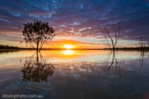 australia;background;beautiful;beauty;blue;branch;bright;color;colorful;dark;daw