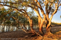 australia;australian;beauty;branches;bush;country;countryside;ecology;ecosystem;