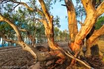 australia;australian;beauty;branches;bush;country;countryside;ecology;ecosystem;