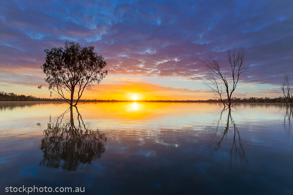 australia;background;beautiful;beauty;blue;branch;bright;color;colorful;dark;dawn;evening;forest;hattah;horizontal;lake;landscape;light;line;morning;mournpall;natural;nature;orange;outdoor;park;pond;ray;reflection;scene;scenery;silhouette;sky;sun;sunlight;sunrise;sunset;travel;tree;trees;view;water;wild;wood;yellow
