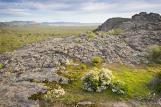 Grampians;Stapylton;Mt;Stapylton;environment;scenery;land;mountain;ranges;golden