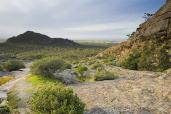 Grampians;Stapylton;Mt;Stapylton;environment;scenery;land;mountain;ranges;golden