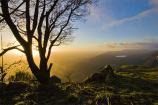 gum;gumtree;trees;tree;tourist;tourism;fern;bracken;county;far;field;bellfield;G
