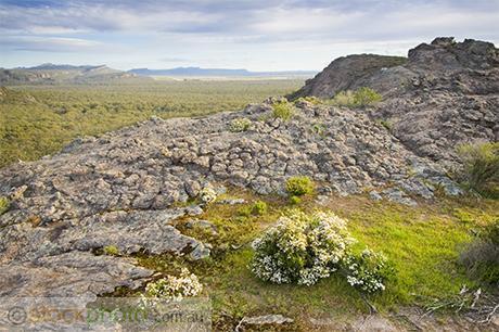 Grampians;Stapylton;Mt;Stapylton;environment;scenery;land;mountain;ranges;golden;hour;evening;rocks;plants;shrub;tree;deciduous;australia;biodiversity;biology;nature;vic;outdoors;green;hiking;hills;hilly;landscapes;unspoilt;view;tourism;tourist;stapylton;flora;forest;reserve;treetops;horizontal;