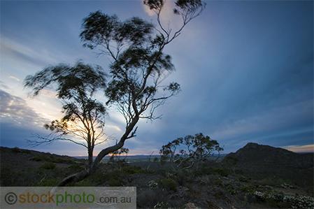 Grampians;Stapylton;Mt;Stapylton;environment;scenery;land;mountain;ranges;golden;hour;rocks;plants;shrub;tree;deciduous;australia;biodiversity;biology;nature;vic;outdoors;green;hiking;hills;hilly;landscapes;unspoilt;view;tourism;tourist;stapylton;flora;forest;reserve;treetops;Mt;Zero;sky;sunset;horizontal;