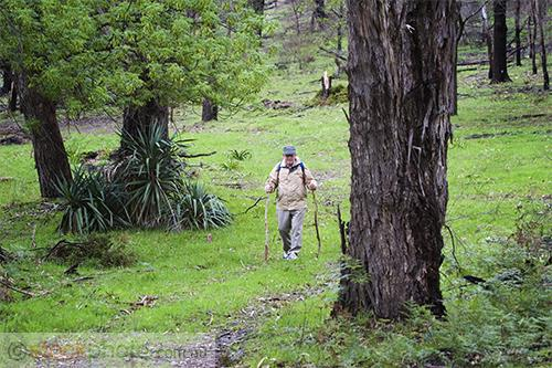 horizontal;crippled;elder;elderly;forest;grass;grey;hike;hiking;man;old;path;retired;senior;stick;trail;trees;people;age;environment;scenery;land;sports;&;recreation;recreation;outdoor;recreation;walking;action;motion;