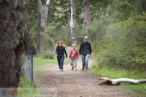gum;gumtree;trees;tree;tourist;tourism;fern;bracken;action;motion;walking;track;path;people;gender;female;women;woman;male;boy;age;teen;teenager;youth;horizontal;burnt;fire;regrowth;victoria;grampians;australia;