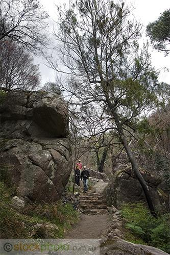 gum;gumtree;trees;tree;tourist;tourism;fern;bracken;action;motion;walking;track;path;people;gender;female;women;woman;male;boy;age;teen;teenager;youth;vertical;environment;scenery;land;rocks;burnt;fire;regrowth;victoria;grampians;australia;