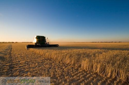 9600;afternoon;agriculture;agronomy;barley;cereal;cereals;color;colour;combine;combining;countryside;crop;crops;cultivation;cut;cutting;deere;farm;farming;farmland;field;food;gather;gender;golden;grain;grow;harvest;harvester;harvesting;hasrvester;header;hopper;job;john;labour;machine;machinery;outdoors;physical;plant;produce;scenic;seed;tractor;tractors;vegetation;victuals;work;working;yellow;horizontal;stubble;
