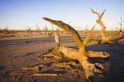 Chinkapook;evening;environment;scenery;lake;salt;salt;lake;saline;arid;semi_arid