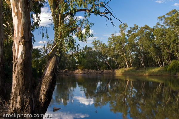 australia;bank;barham;blue;border;borderline;calm;day;dividing;ecology;ecosystem;environment;environmentalism;eucalypt;eucalyptus;flowing;gum;hill;line;mirrored;murray;nature;new;peaceful;red;reflection;reflections;river;scenery;sky;south;summer;sunny;swan;swollen;tree;trees;vacation;victoria;wales;water;watercourse