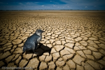 barren;bleak;body;boga;concept;concepts;conceptual;cracks;desolate;drought;dry;e