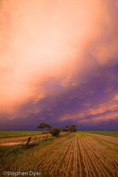 agriculture;agronomy;cloud;clouds;crop;crops;ecology;ecosystem;environment;environmentalism;farm;field;grain;kunat;road;scenery;sky;sunset;transport;transportation;trees;weat;wheat