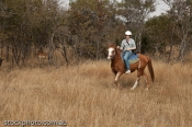 RIDE;RIDER;africa;animal;antelope;beautiful;bush;camers;cloud;country;environmen