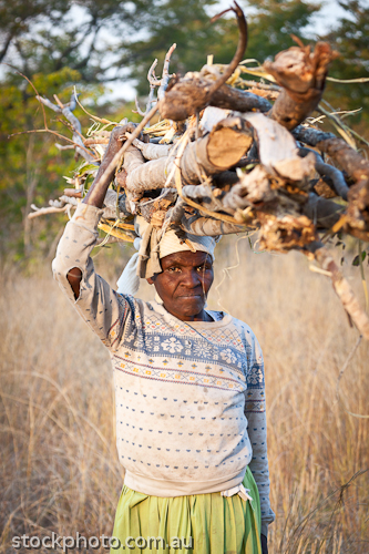 africa;african;africana;big;collecting;conservation;ecology;heavy;hwange;load;miombo;national;natural;nature;old;outdoor;park;safari;savanna;savannah;southern;vertical;wild;wilderness;woman;wood;zimbabwe