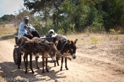 adventure;africa;african;africana;animal;big;carriage;cart;cross;donkey;exotic;f
